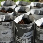 DIY: Newspaper Seed Pots