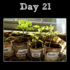 DIY: Newspaper Seed Pot Update