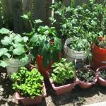 DIY: Container Vegetable Garden (Update)