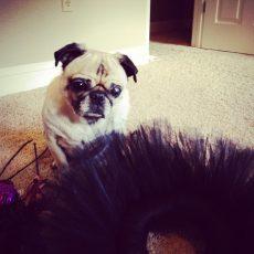 pug wreath