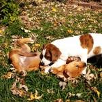 Puppy Fights