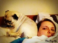 Personal Space – Pug Lacks It