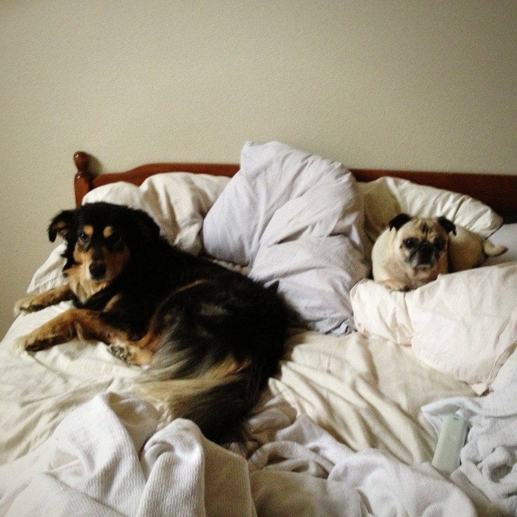 Bed Thieves