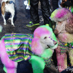 Mardi Gras in St. Louis: Beggin' Pet Parade (Part 2)
