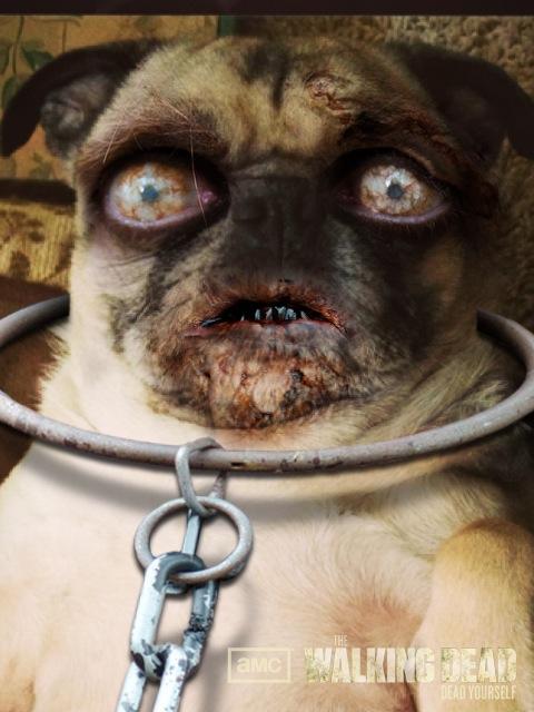 The Walking Dead Zombie Pug