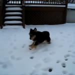 This Pug Life presents: Dog on Ice