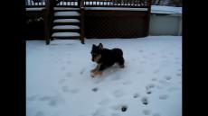 molly on ice
