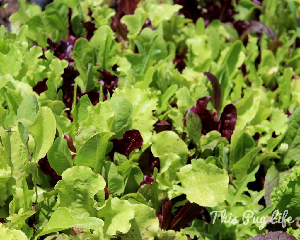 city seeds urban farm