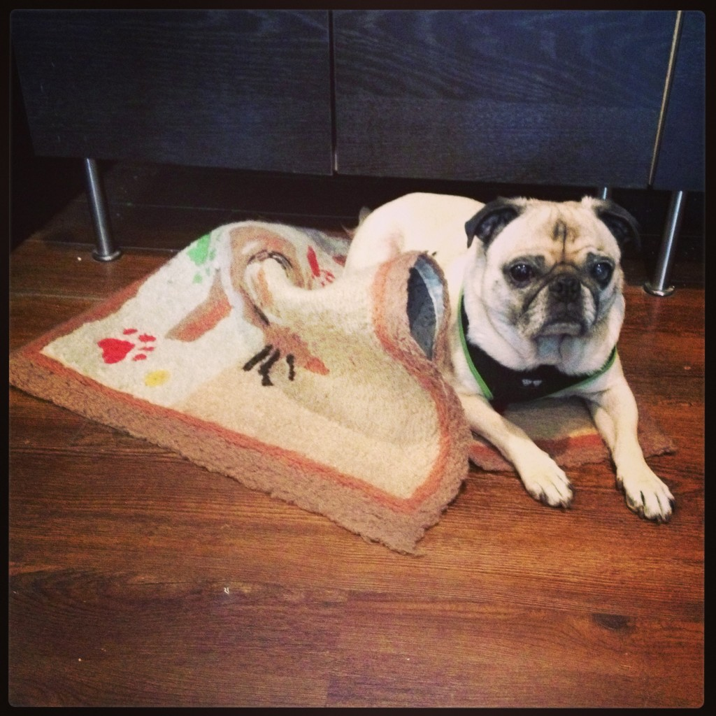 pug destroying rug