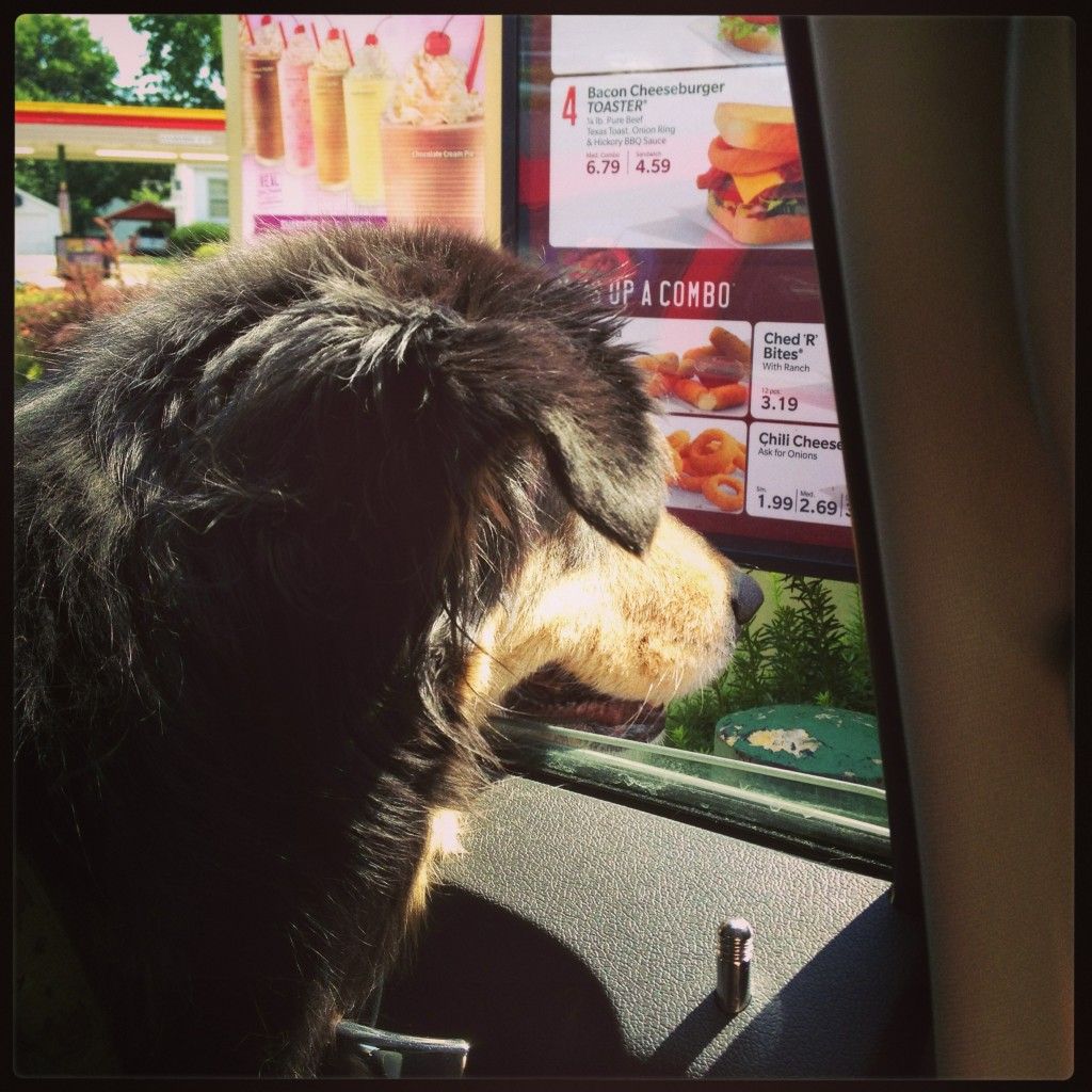 dog at Sonic drive in