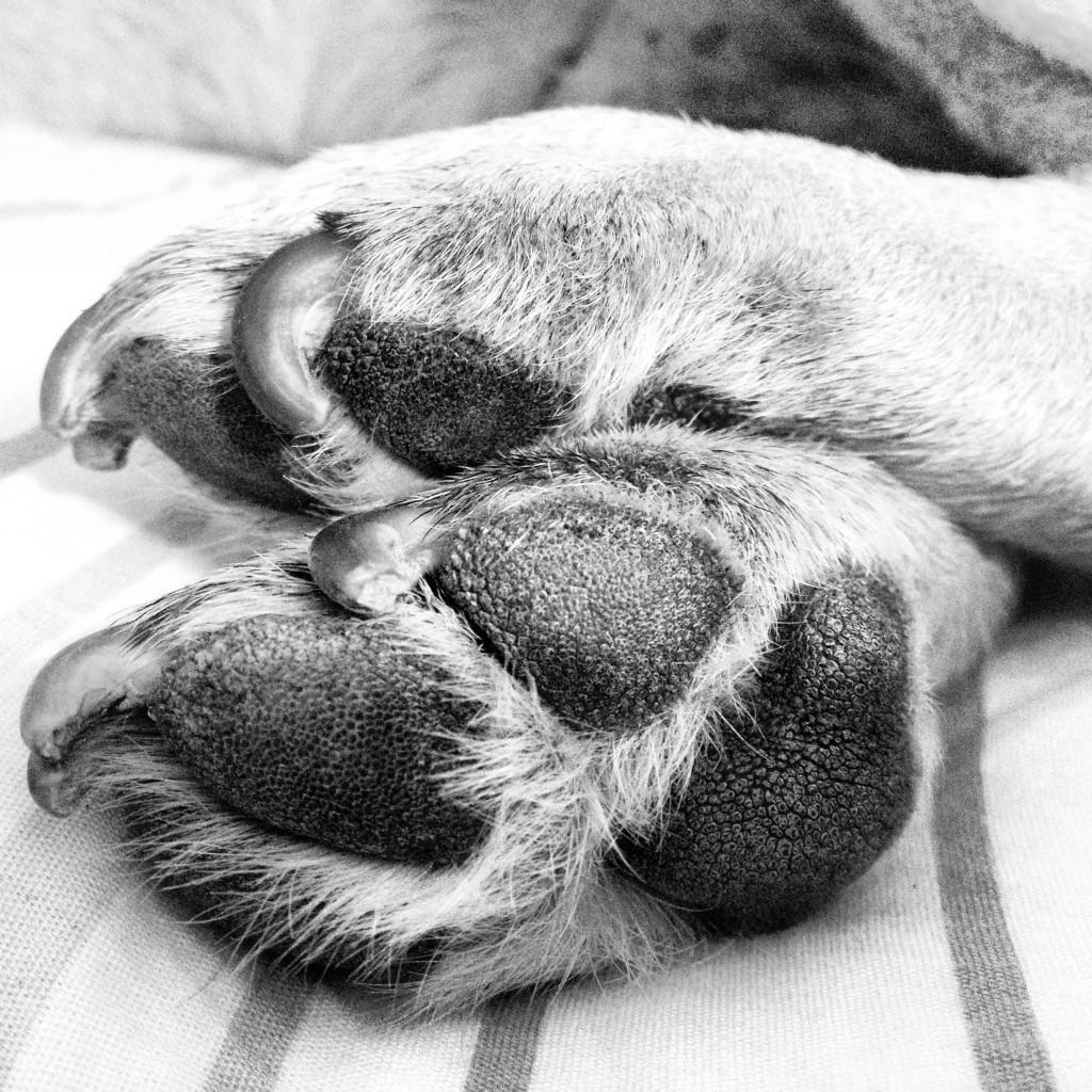 Frito feet