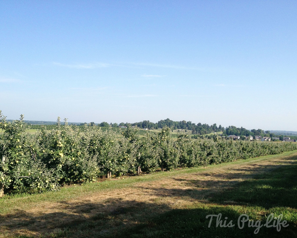 Eckert's Apple Orchard