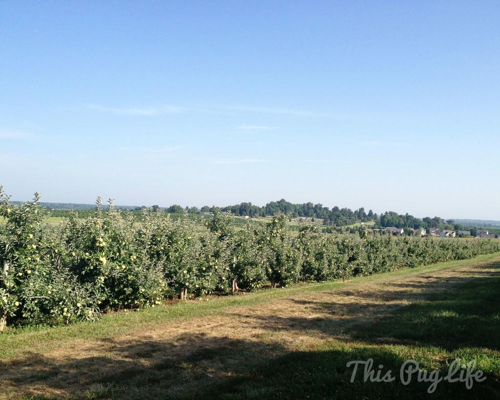 Eckert's Apple Orchard