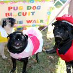 Pug Party 2013 (Part 2)