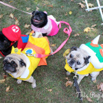 Pug Party 2013