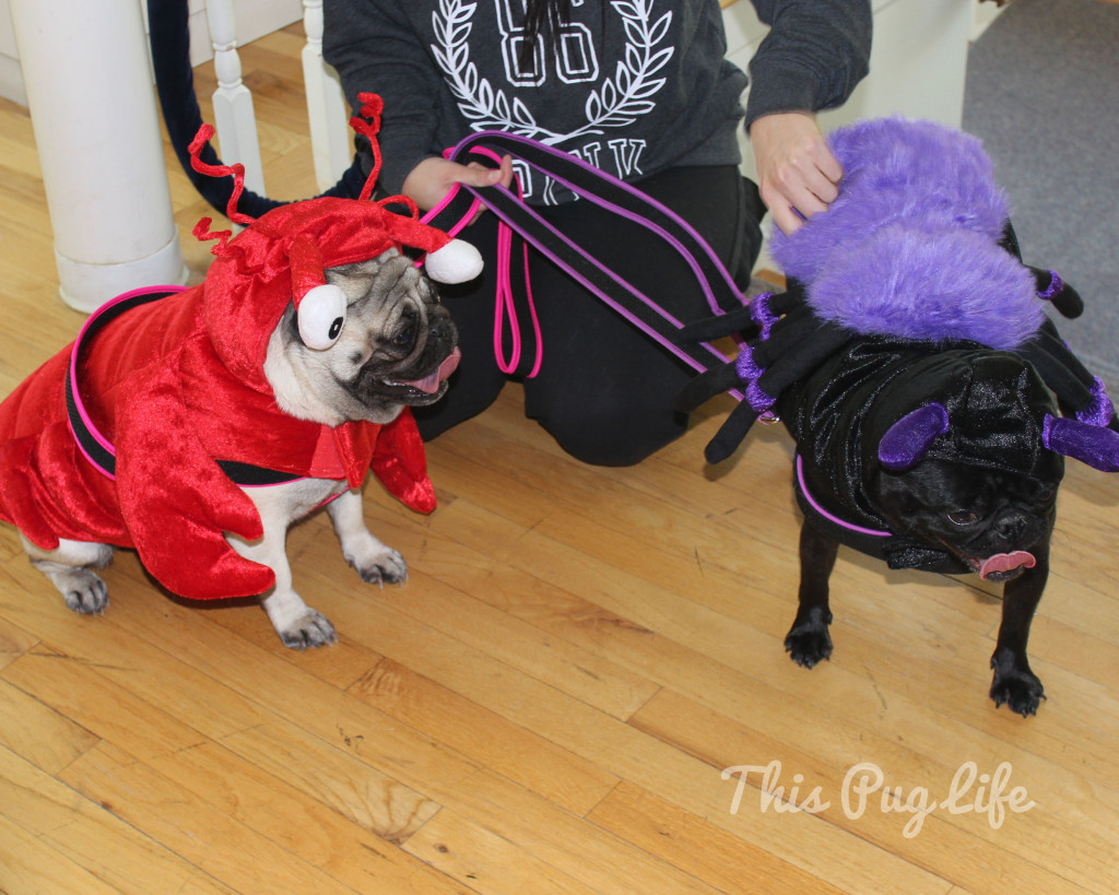 Lobster Pug and Spider Pug