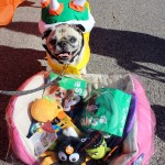 Stray Rescue of St. Louis Spooktacular