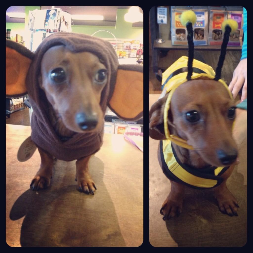 dachshund Halloween costume