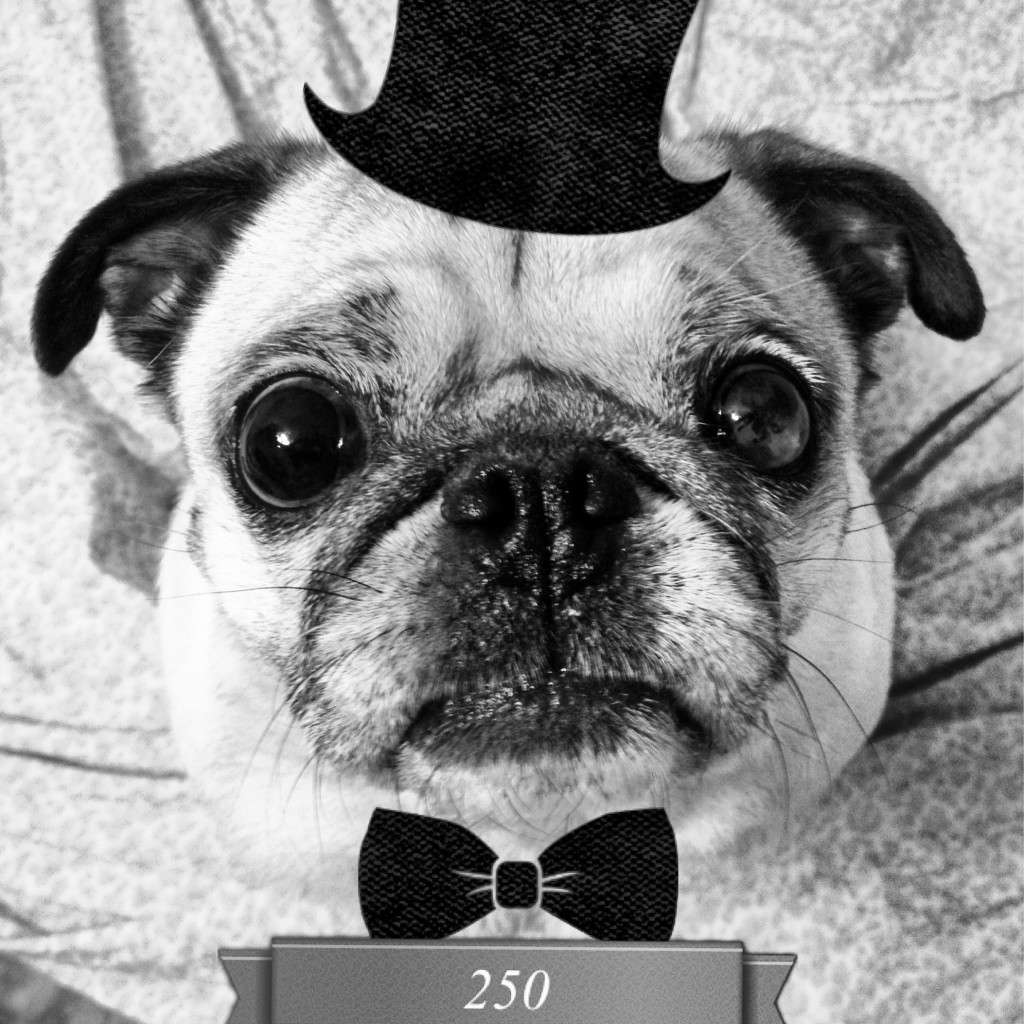 pug top hat bow tie