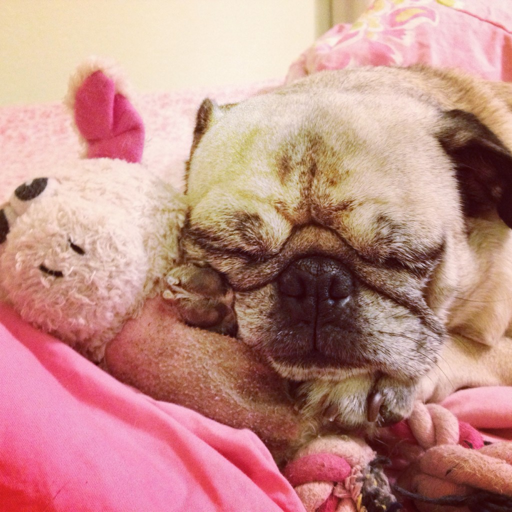 piggy pug pillow