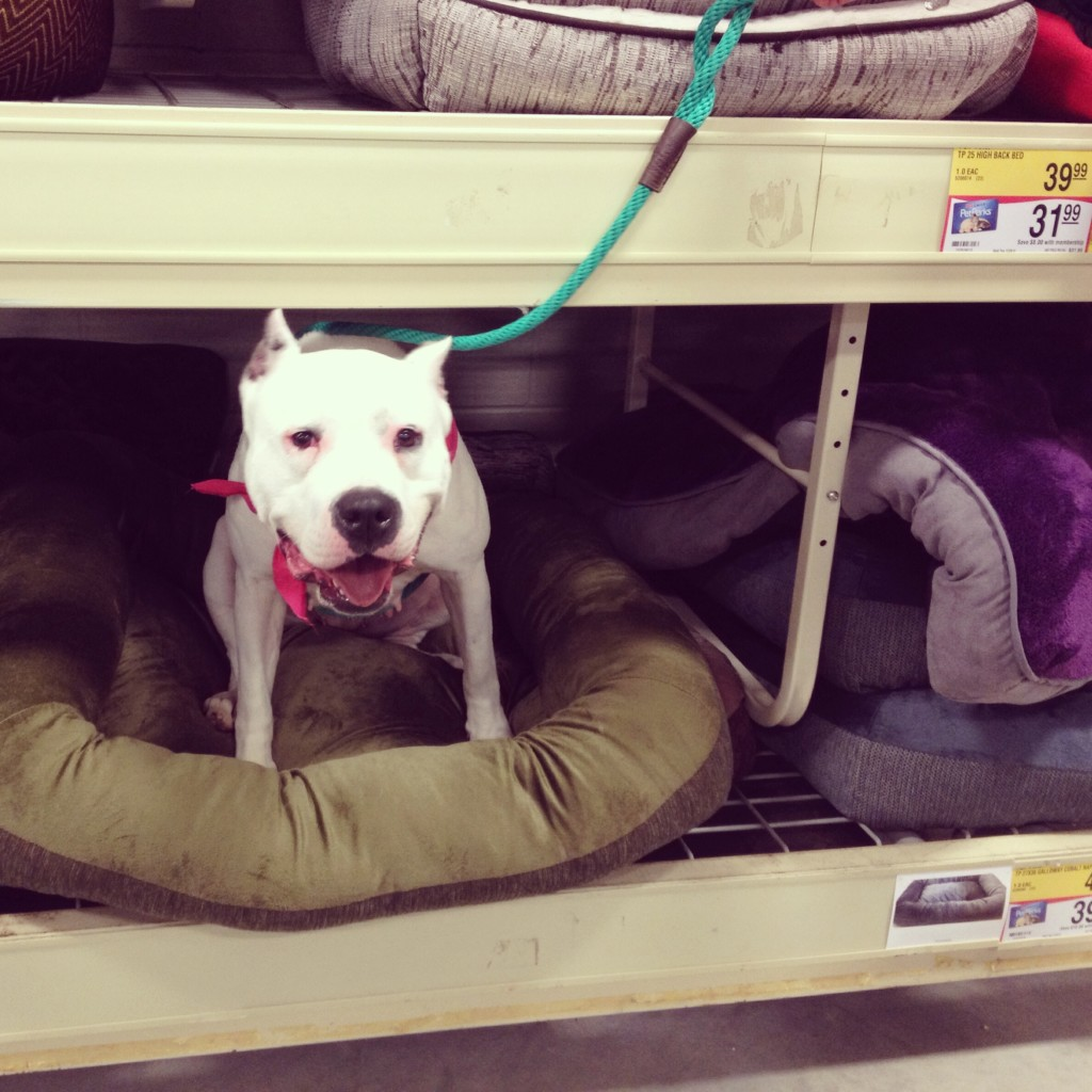 petsmart dog beds