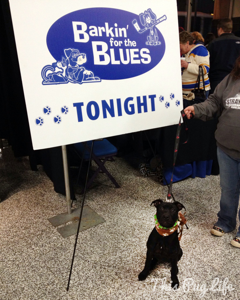 Barkin' for the Blues 2013