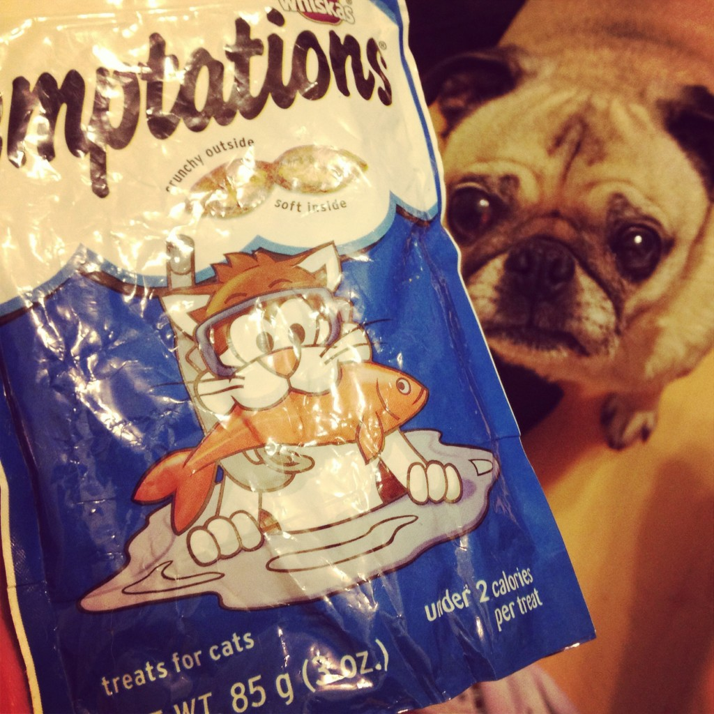 Pug Stole Cat Treats