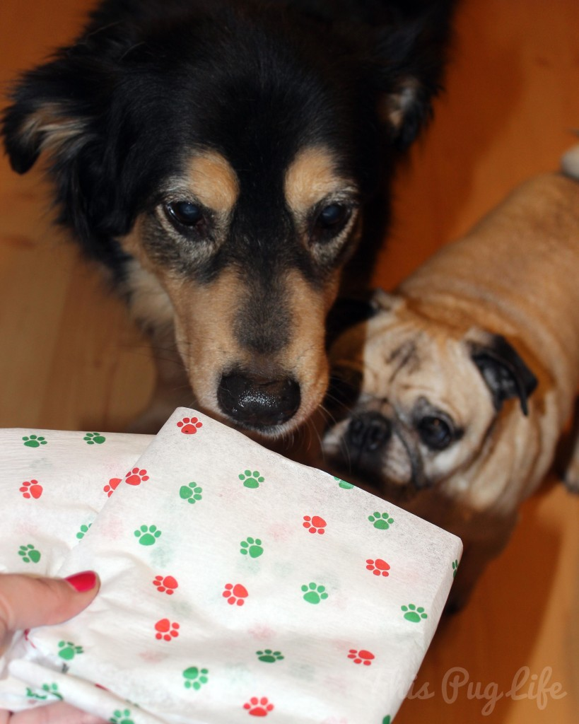 Dog Christmas Gifts