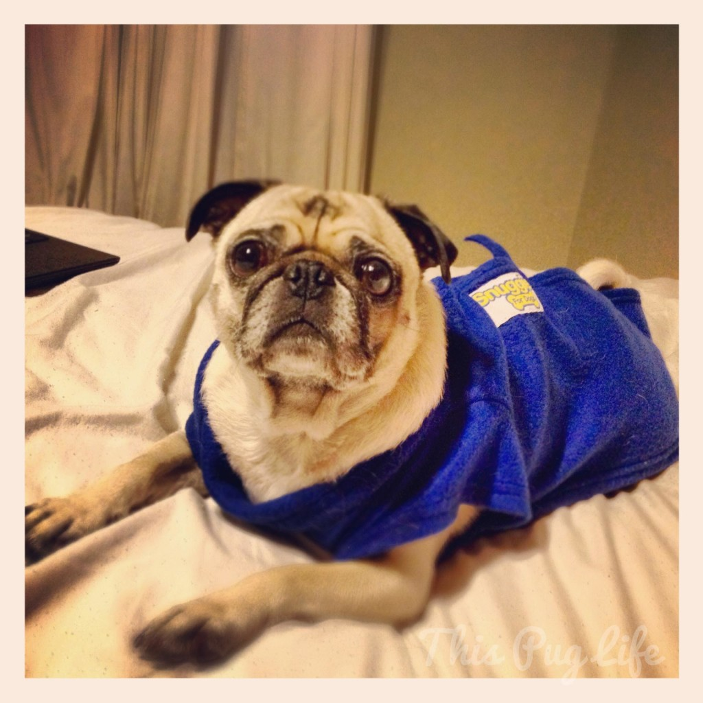 Pug Wearing Snuggie