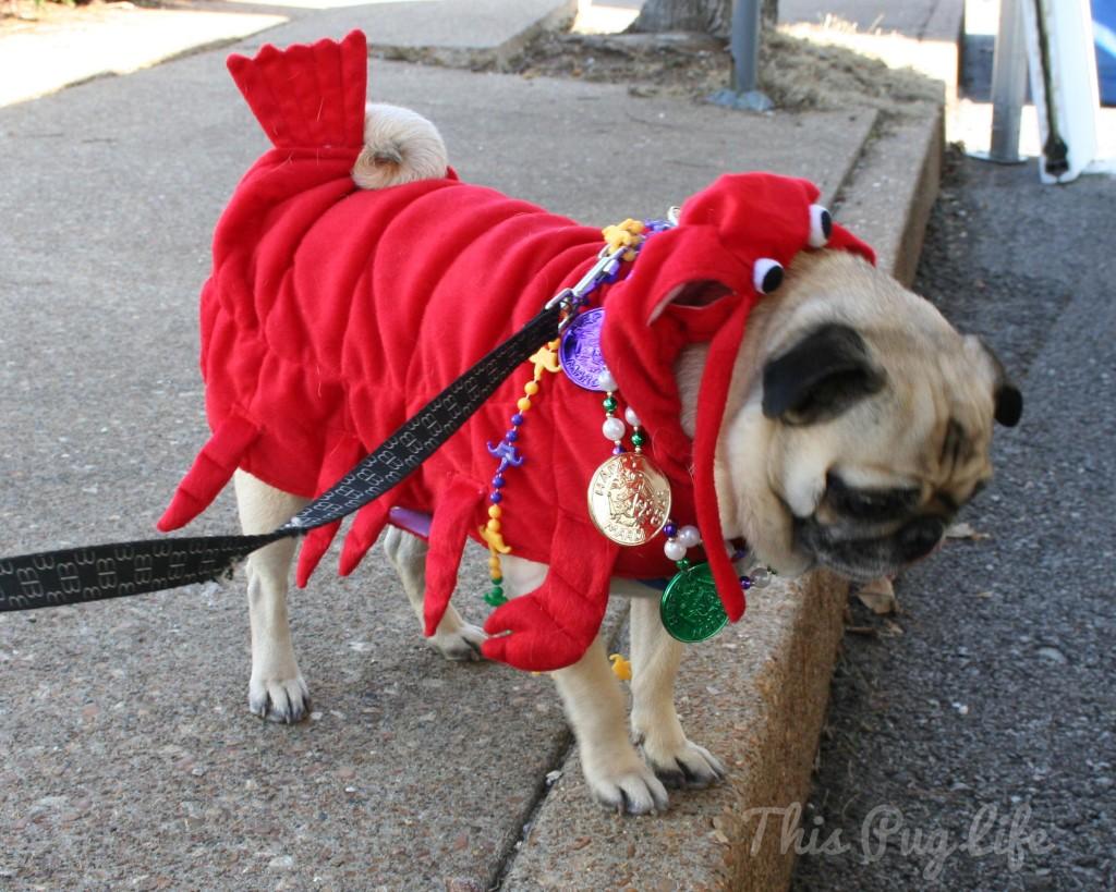 Mardi Gras Lobster Pug