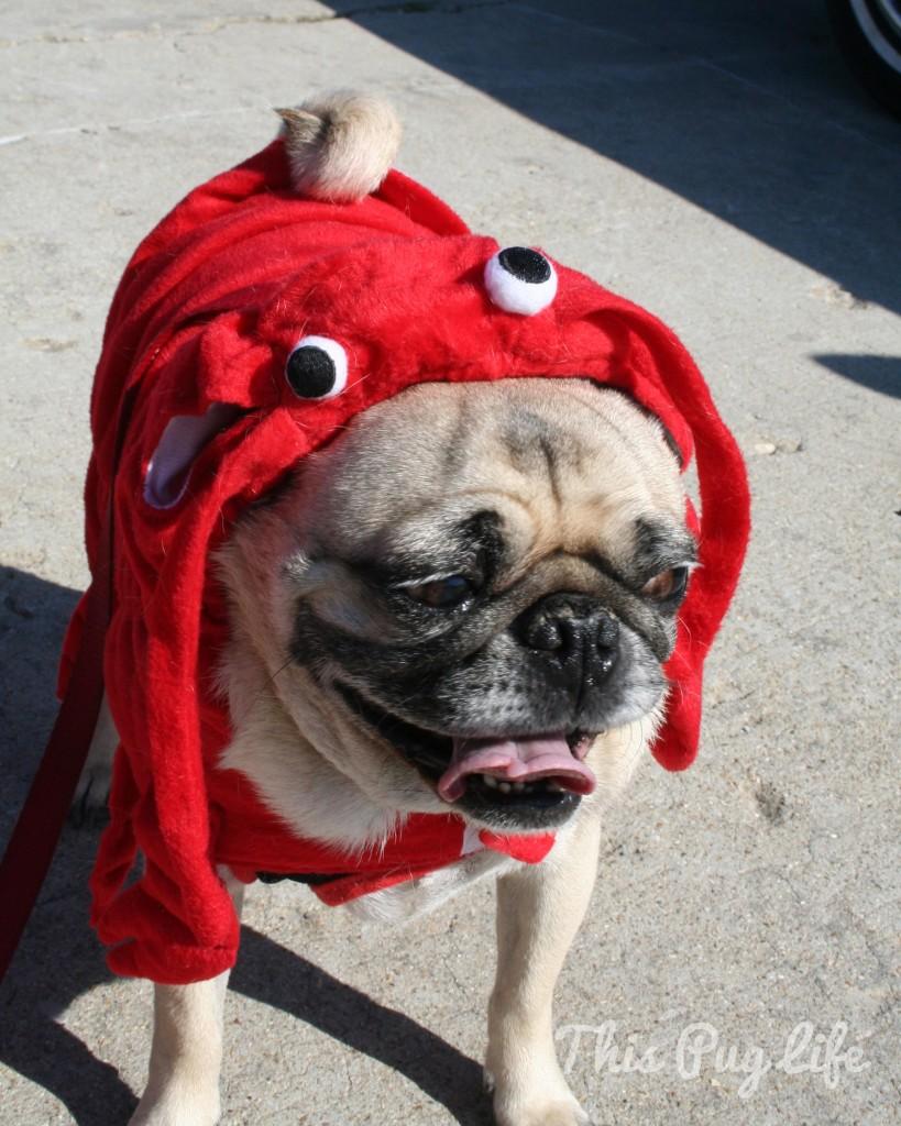Lobster Pug