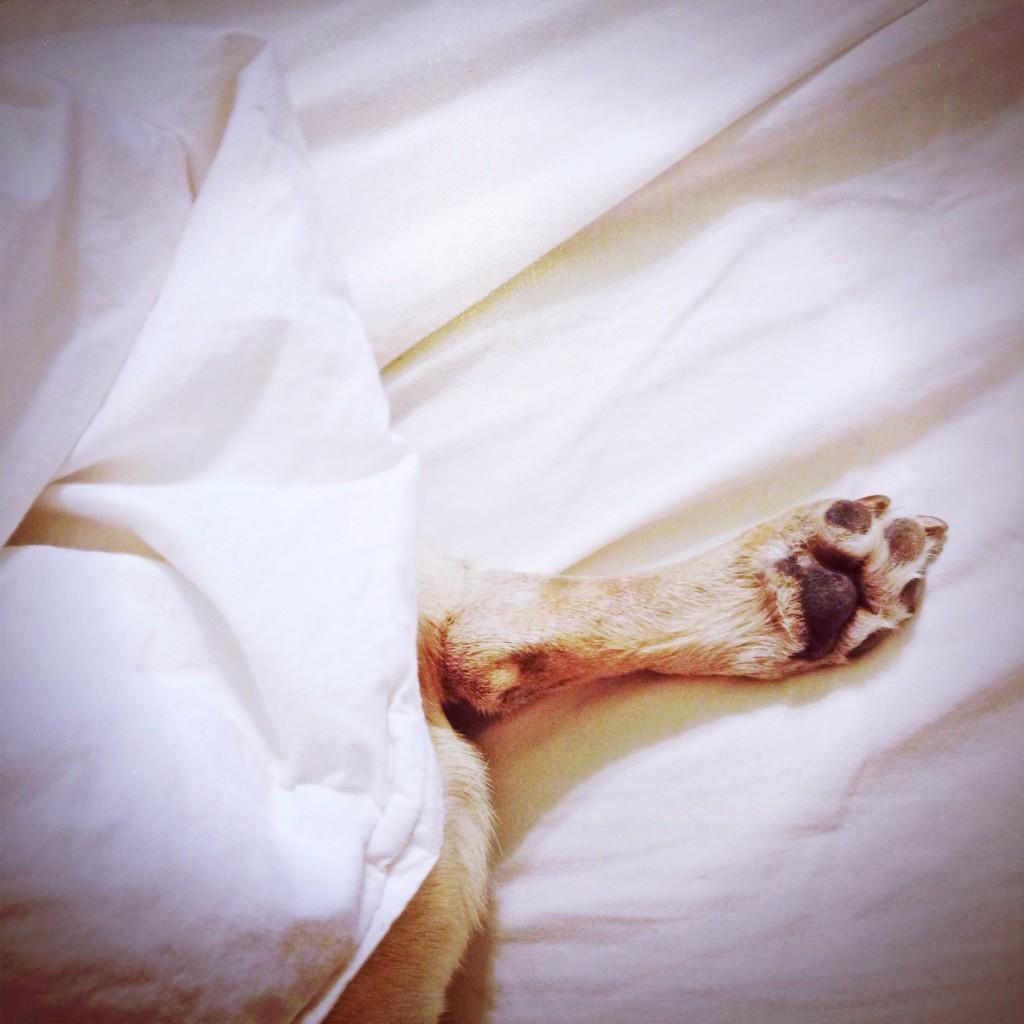 Pug Foot