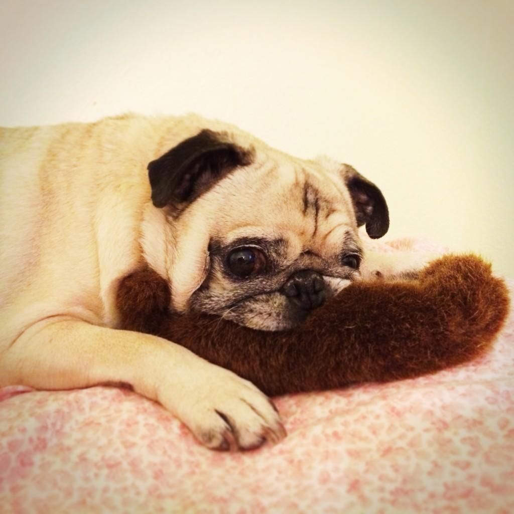 Pug Mustache Toy