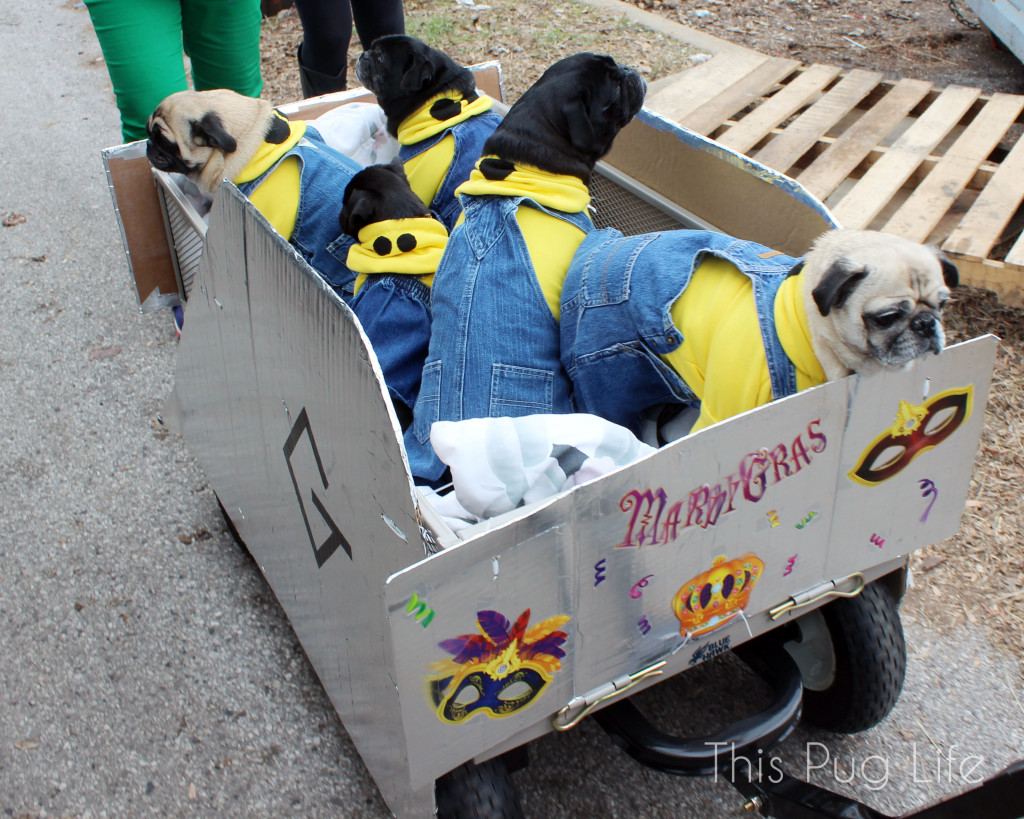 Minion Pugs
