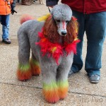 St. Louis Mardi Gras Beggin' Pet Parade 2014 (Part 2)