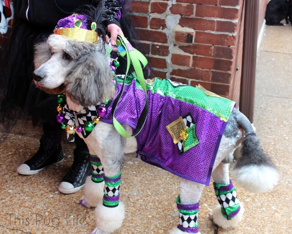 Beggin' Pet Parade