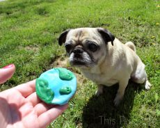 Earth Day Pug