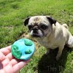 Pug Celebrates Earth Day