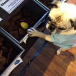 Pug Goes on an Easter Egg Hunt