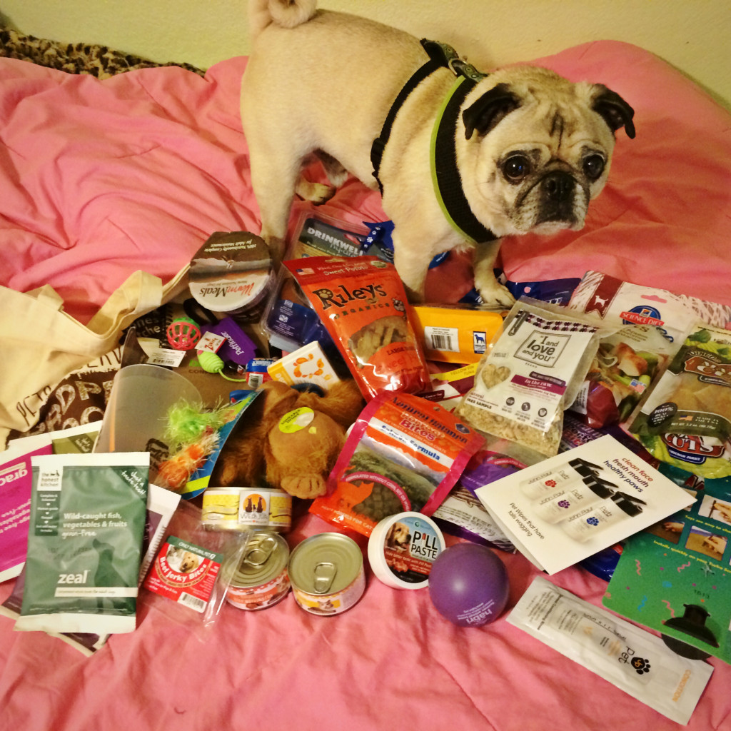 Pug with Swag Bag