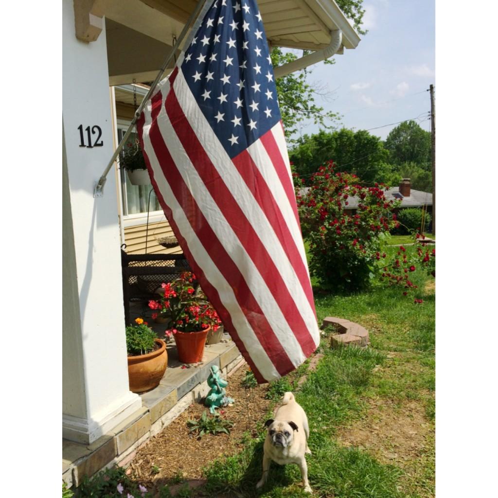 Memorial Day Pug