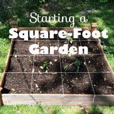 Start a Square Foot Garden