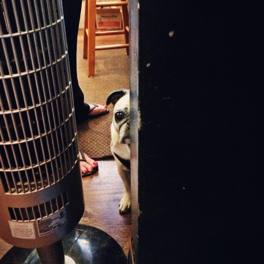Creepy Pug