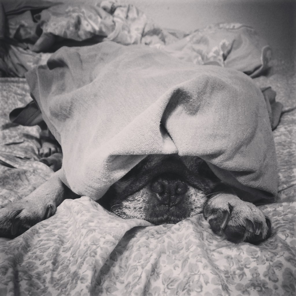 Puggy Don't Care