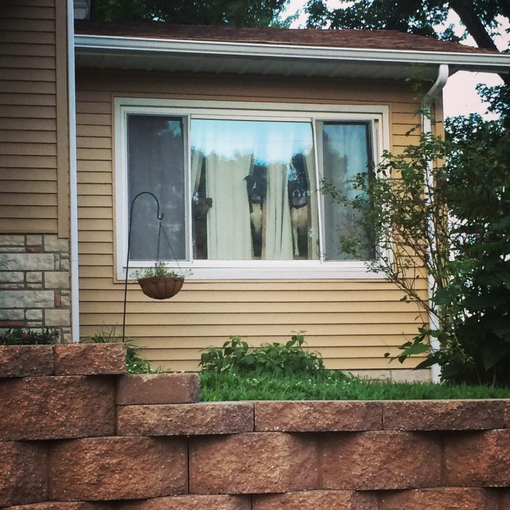 Peeping Dogs