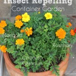 DIY Insect Repelling Container Garden