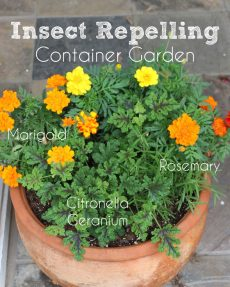 Insect Repelling Container Garden