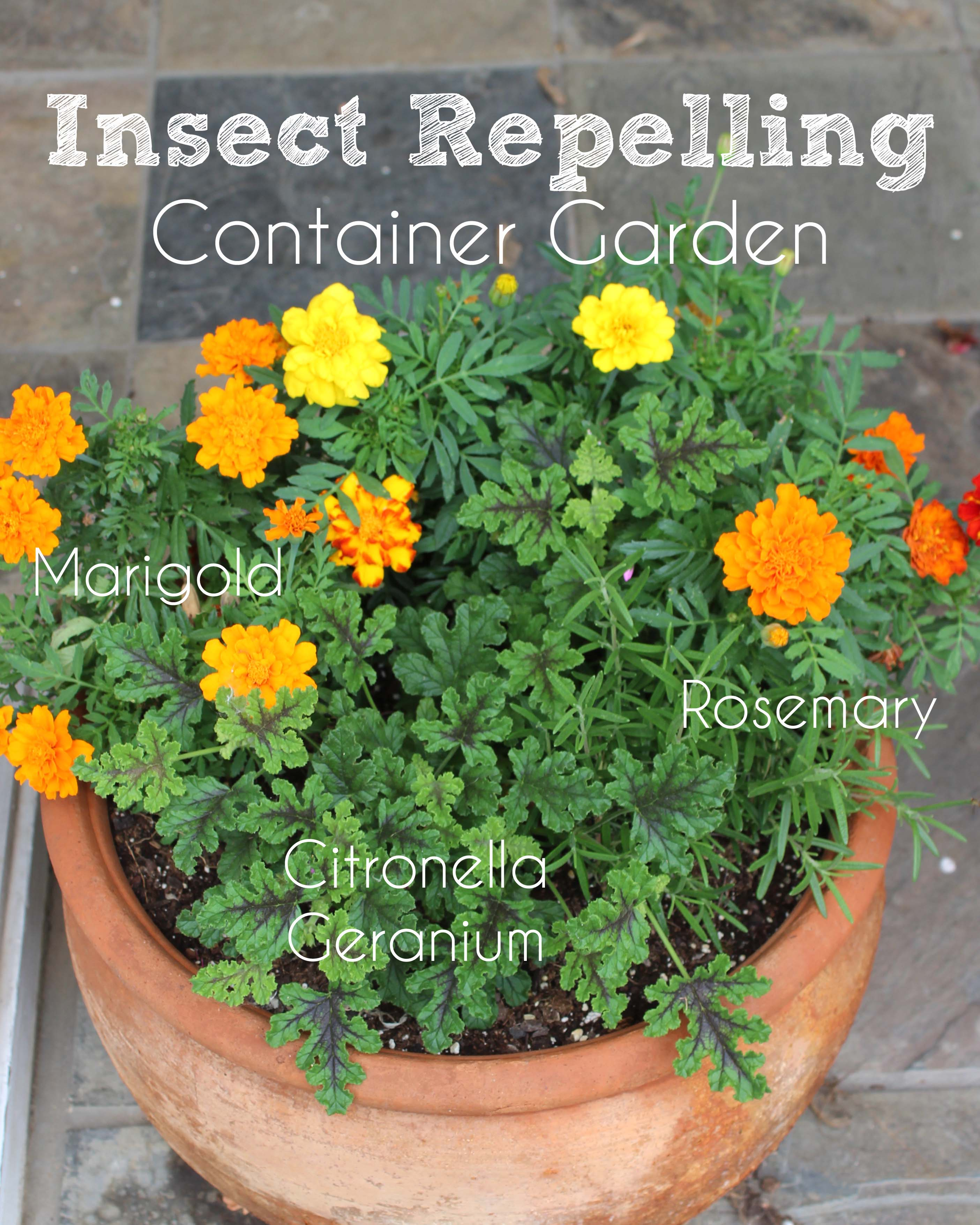 Plants Repel Insects: DIY Insect Repelling Container Garden