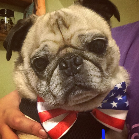Pug American Flag Bow Tie