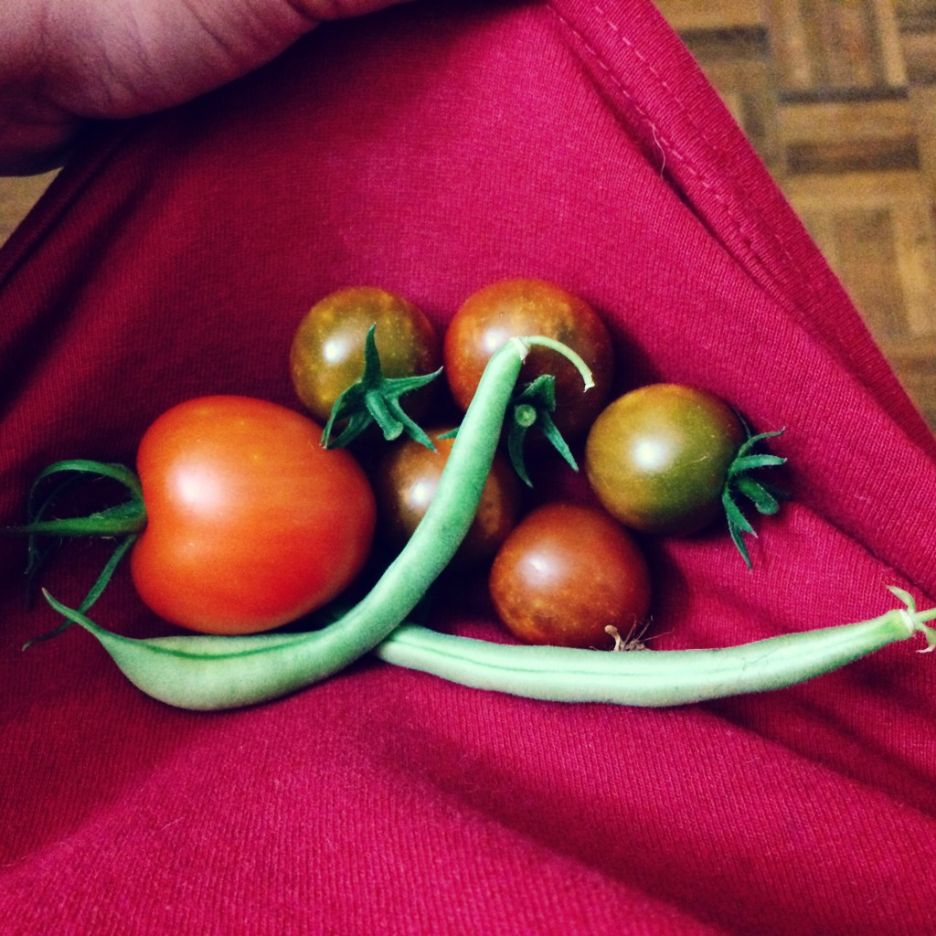 Square Foot Garden Harvest